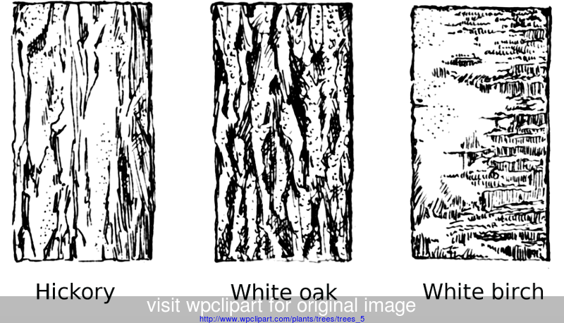 Tree Bark Types Texture Drawing Tree Sketches Tree Drawing