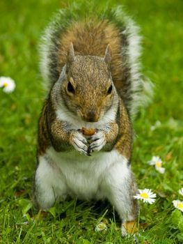 How to keep squirrels out of your garden garden ideas - How do you keep squirrels out of your garden ...