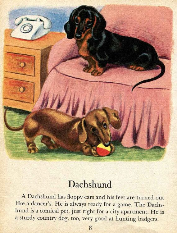 Dachshund Dog Print Tibor Gergely Children S Illustration