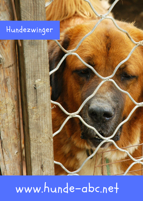 Hundezwinger Onlineshop 30 Jetzt Gunstig Kaufen Hunde Hundezwinger Gesunde Hunde