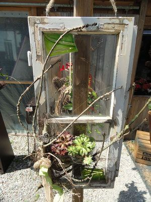 Alter Fensterrahmen Mit Hauswurzen Gartendeko Von Franz Und Karin 84155 Aich Niederaicher Str 28 Garten Deko Alte Fenster Dekorieren Alte Fenster Ideen