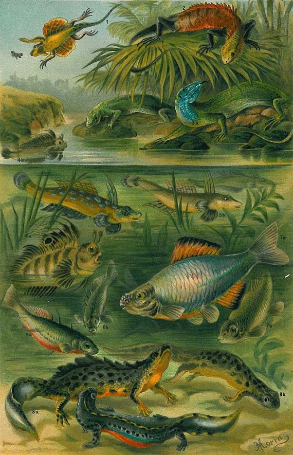 1920s Fishes and Amphibians Mating Season Color by carambas, $16.00