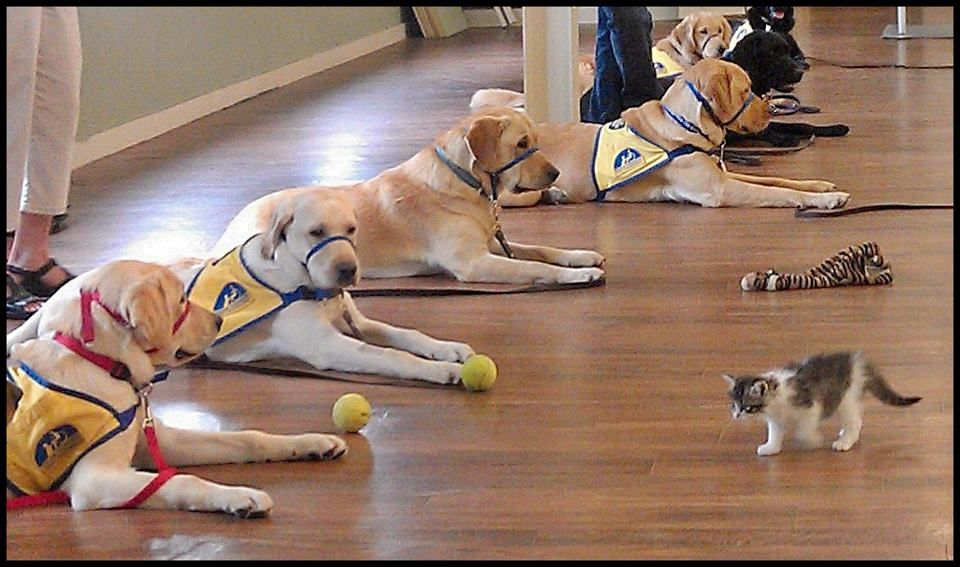 Canine Companions Puppies In A Training Class In Atlanta Learn