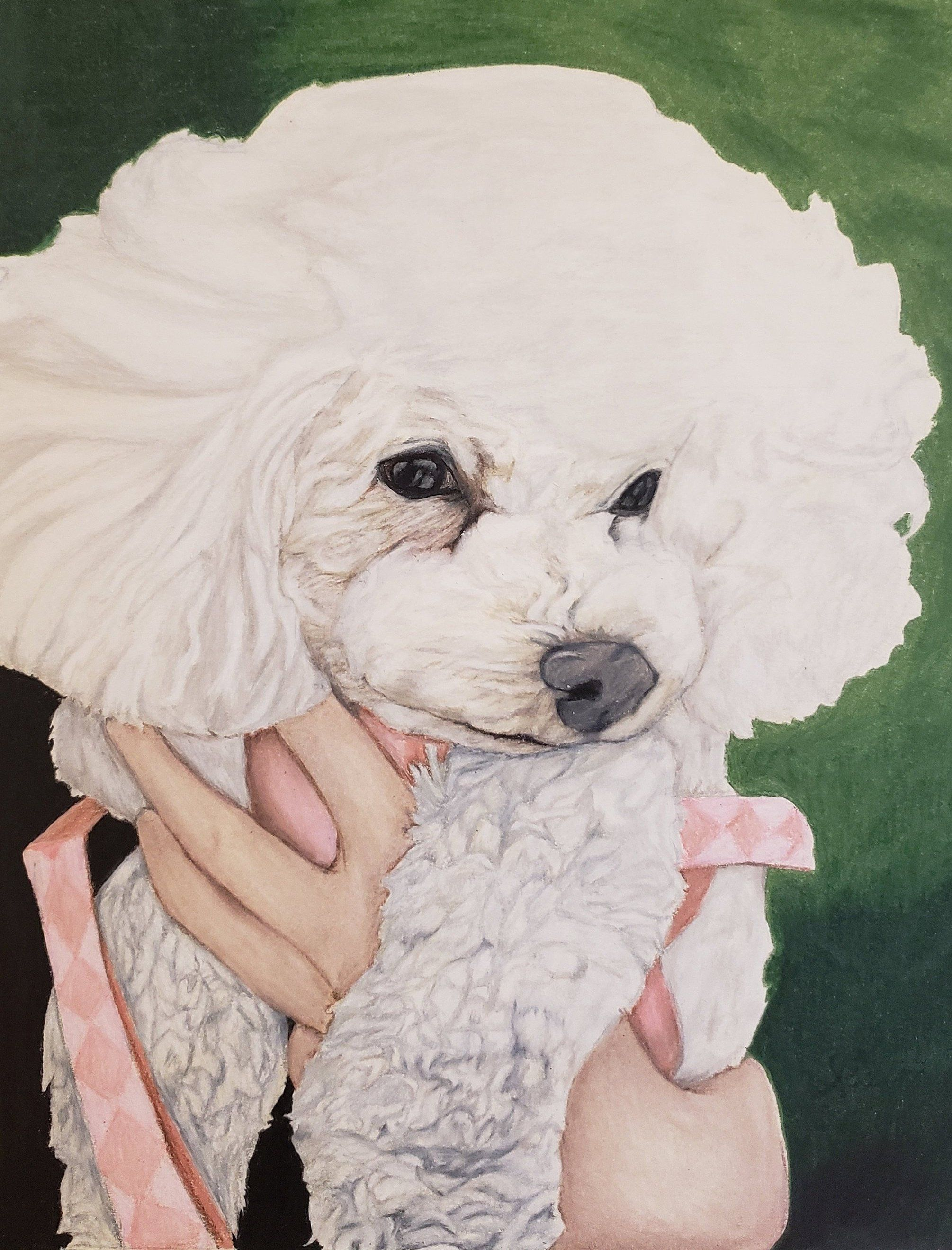 Poodle Portrait Turn Your Picture Into An Original Drawing Fun