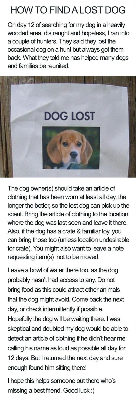 Lifehacks How To Find A Lost Dog Minipet Online Pet Boutique