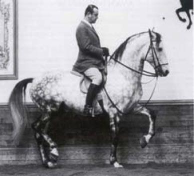 Nuno Oliveira Dressage Lusitano Horse Warmblood Horses