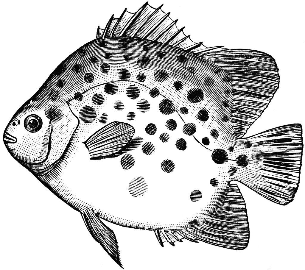 FREE ViNTaGE DiGiTaL STaMPS**: Free Digital Stamp - Spotted Fish ...