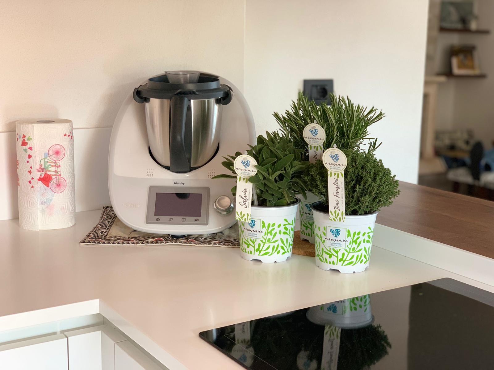 Coltivare In Casa Piante Aromatiche un giardino domestico di vasetti: le piante aromatiche (con