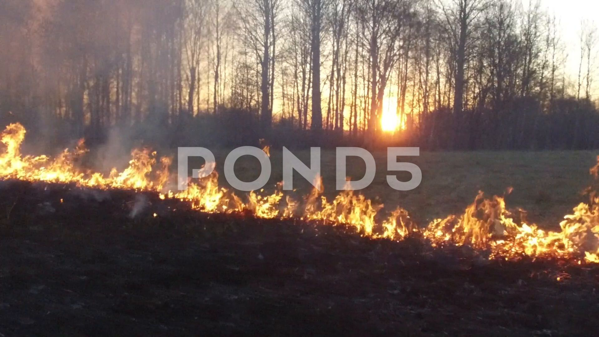 anadrol frass burning