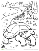 Color the Tortoise and the Hare | Coloring pages, Fairy ...