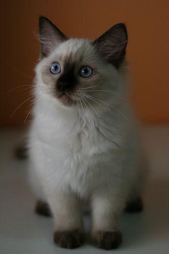 Prisyadem Na Dorozhku Cute Cats Cute Animals Pretty Cats