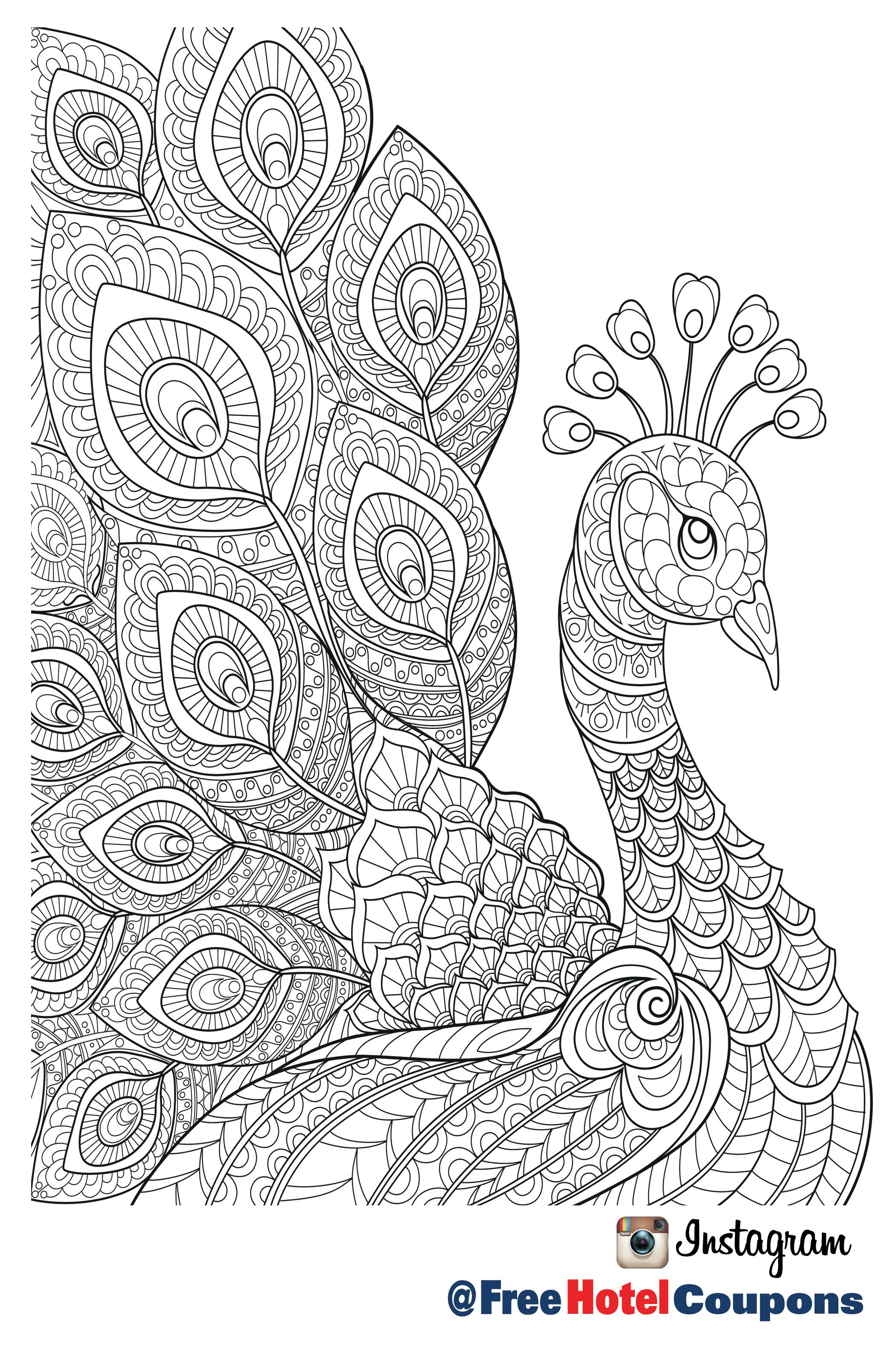 Pin by free hotel coupons on coloring pages peacock coloring pages