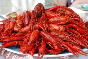 Boiled Crawfish By the Pound Frozen (IQF) 10 lbs! How cool