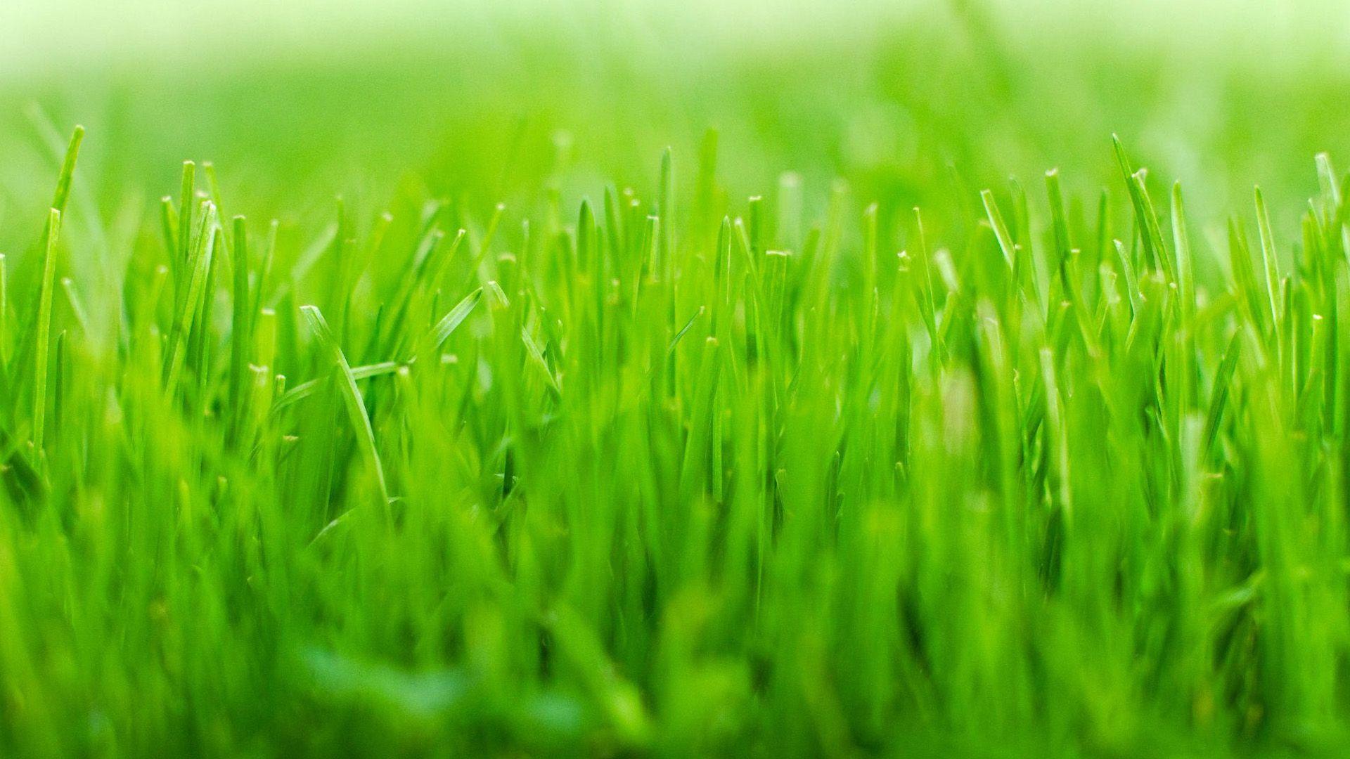 HD green grass Wallpapers.jpg (1920×1080) Grass