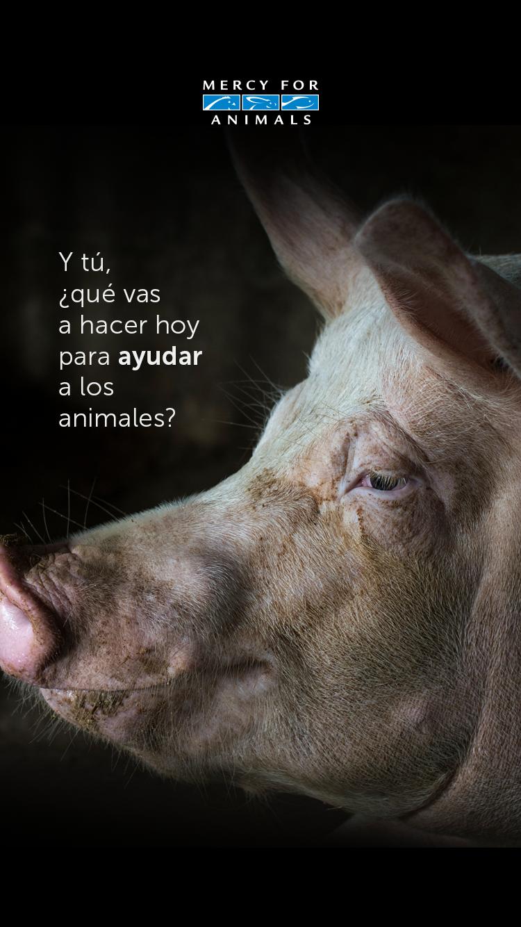 7 Maneras De Ayudar A Los Animales Este Año Animales