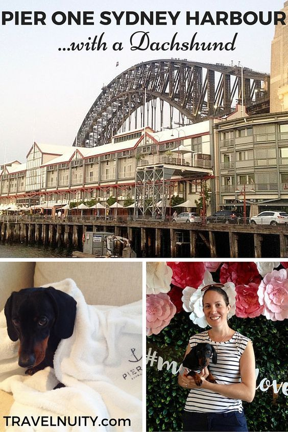 Dog Friendly Hotel Review Pier One Sydney Harbour Dog Friendly Hotels Australia Travel Traveling By Yourself