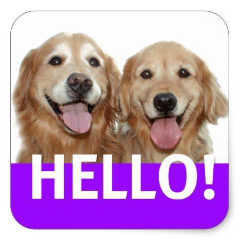 Golden Retriever Hello Square Sticker Dog