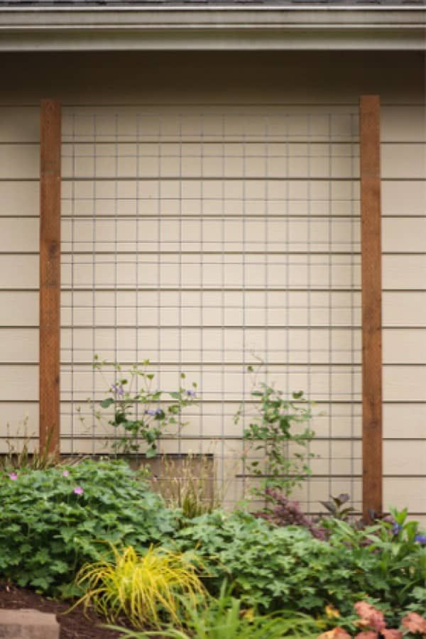 21 Best DIY Trellis Ideas For The Gardener In You - Crazy Laura