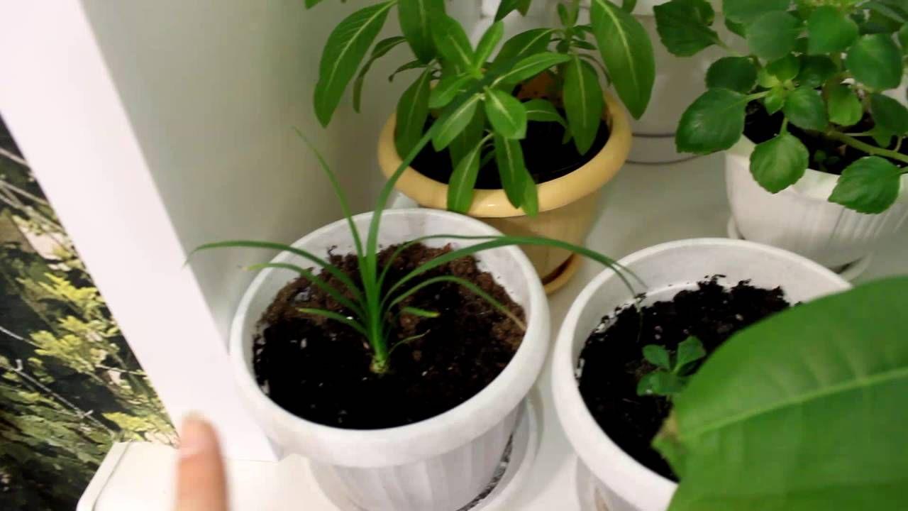этого заключается кто вырастил комнатные цветы из семян фото того, эффективность зависит