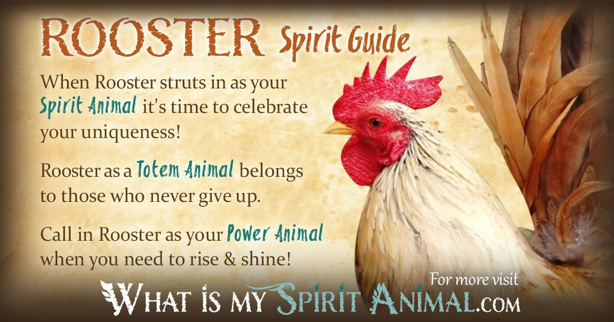 Rooster guide to online dating