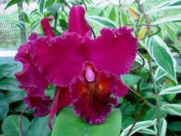 as orquideas mais belas do mundo - Pesquisa Google