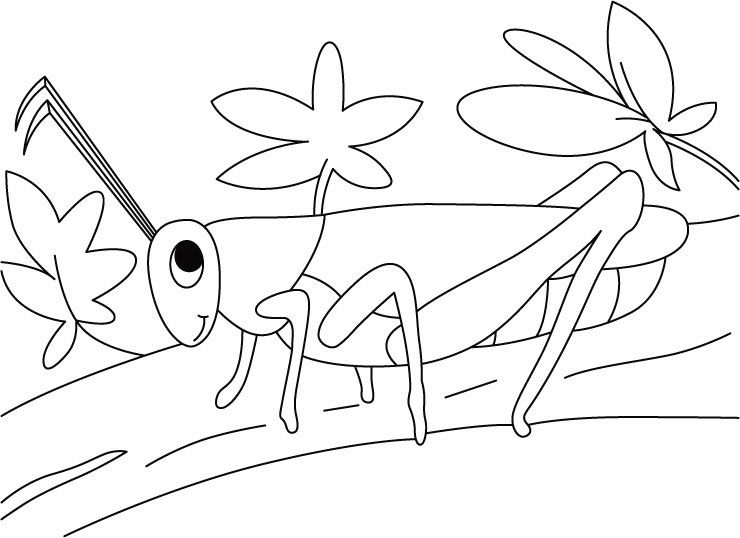 Grasshoppers Walk In Twig Coloring Pages For Kids Printable