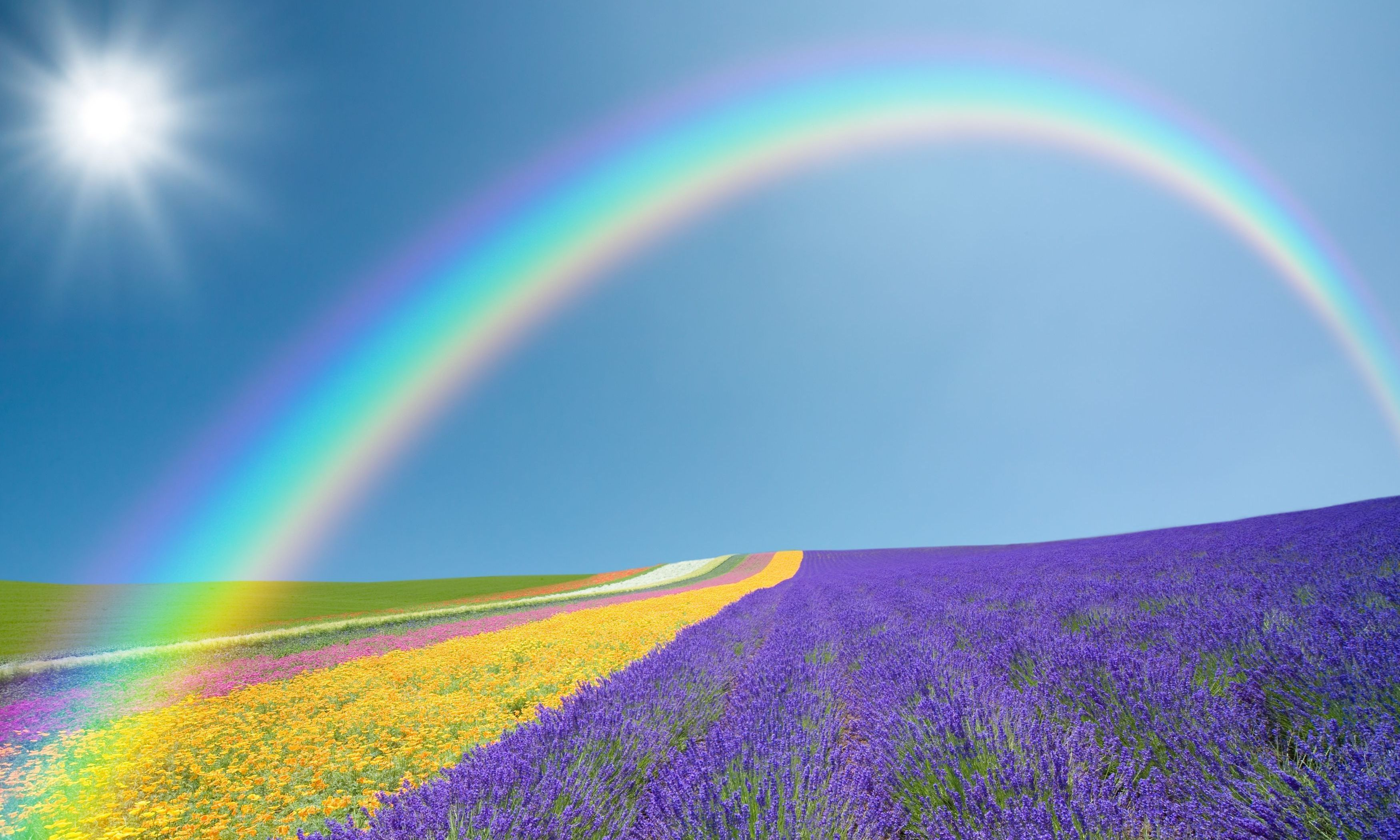 Rainbow Sky Desktop Background Flowers Purple Yellow Green Rainbow Sky Sun Wallpaper Background Sunshine Wallpaper Rainbow Images Rainbow Sky