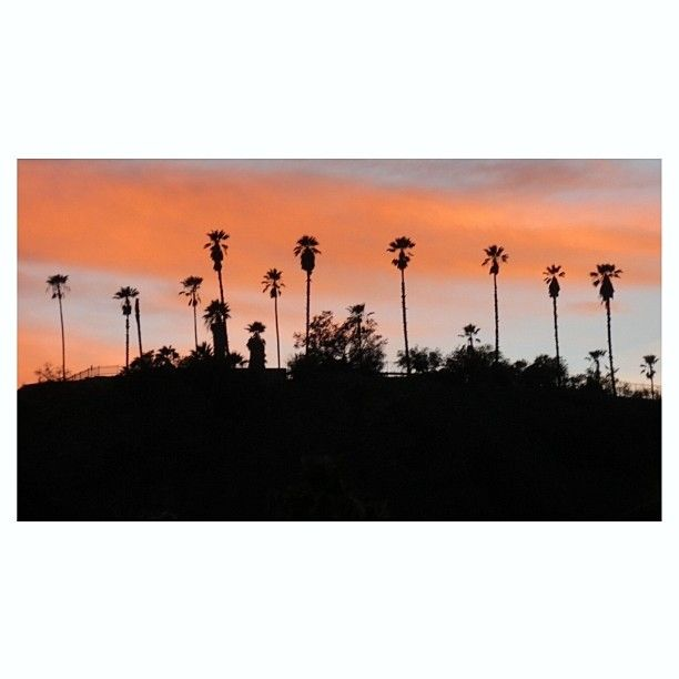 THINK BLUE: Sunset over #DodgerStadium . #ElysianPark #ChavezRavine #LosAngeles #LA #CityofAngels #NELA #EchoPark #SilverLake #AtwaterVillage #LosFeliz #AngelinoHeights #ElysianHeights #DTLA #DowntownLA #Sunset #Dodgers #DodgerTown #PalmTrees #SoCal #California #StreetPhotography #StreetScene #Canon #CanonCamera #CanonPhoto #CanonPhotography by rustybee54