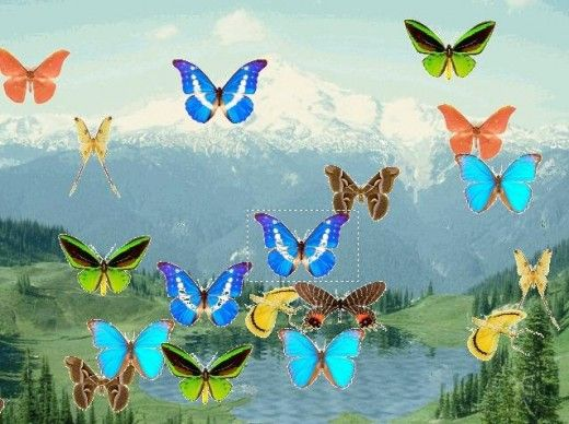 Butterfly Photos and Names Free | Butterfly Pond Screensaver