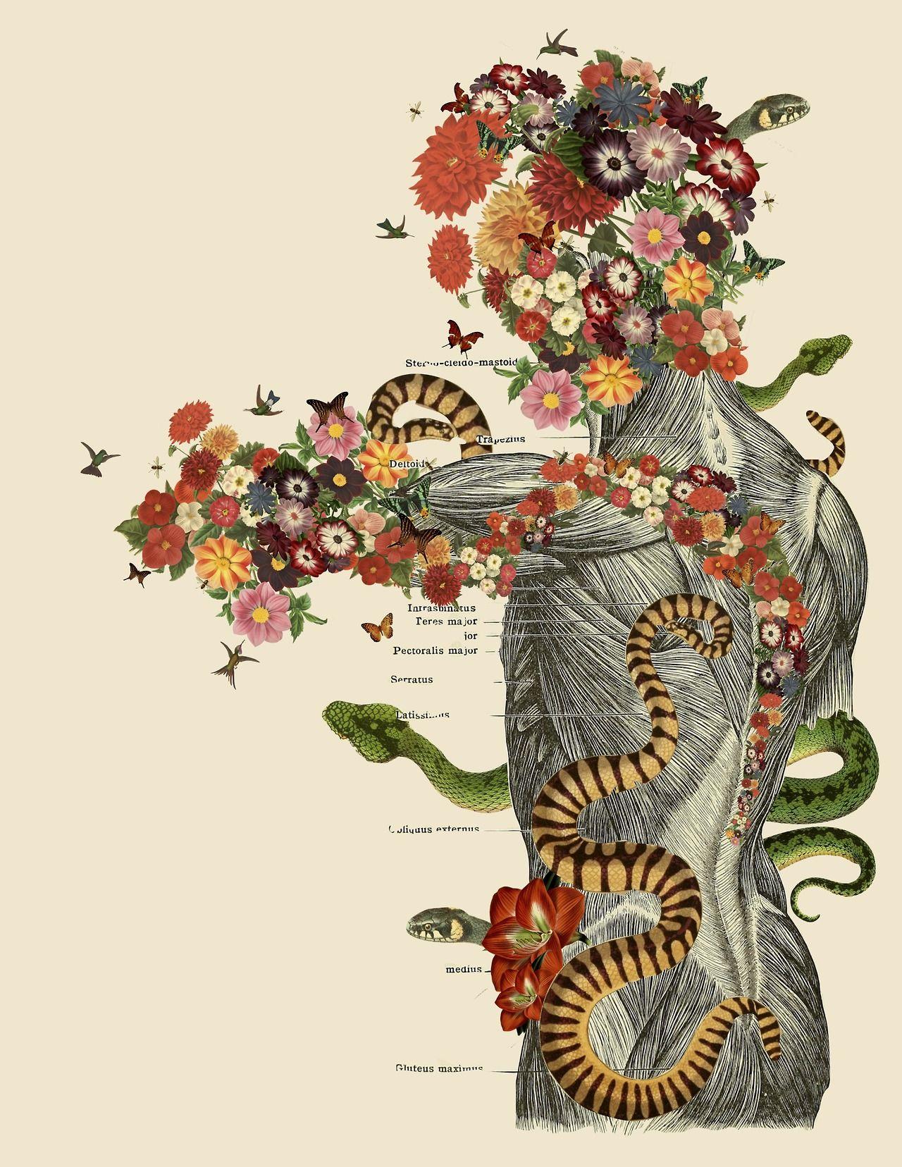Anatomical Collages by Travis Bedel | Arte | Pinterest | Libro de ...