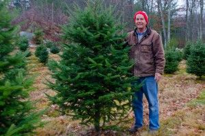 Christmas Tree Growers Invest Time To Produce Perfect Firs Newbostonpost Christmas Tree National Christmas Tree Tree
