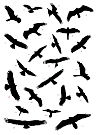 Image Result For Birds Flying Silhouette Flying Bird Silhouette Bird Silhouette Tattoos Bird Silhouette