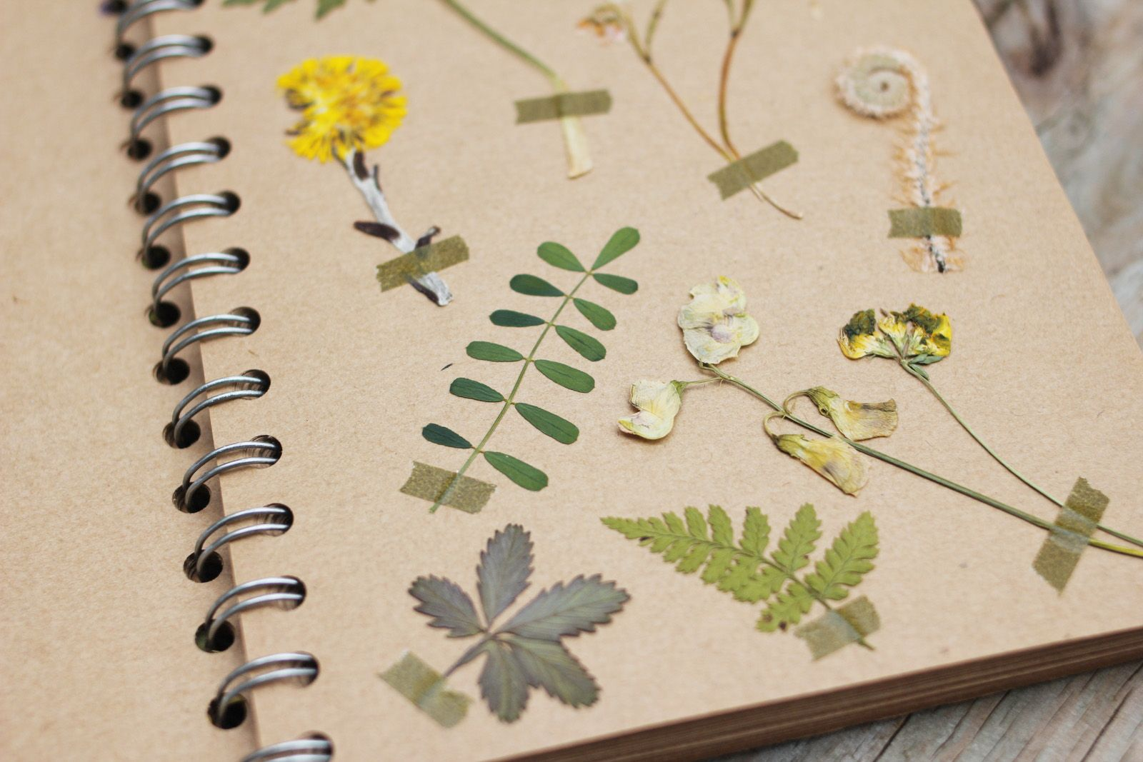 How to scrapbook dried flowers - Pretty Way To Organize Pressed Flowers Held In Place With Washi Tape In A Kraft