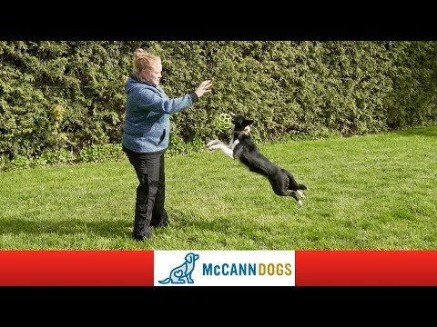 Teach Your Puppy To Fetch And Love To Bring The Toy Back Youtube