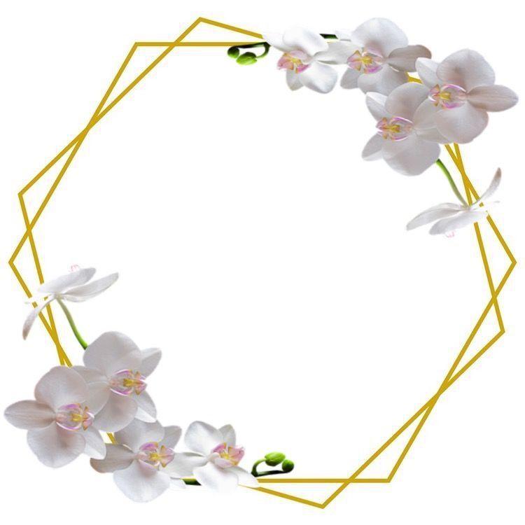Arka Plan Resimleri Pervaz Stickers Cerceveler Tags Davetiyeler Flower Frame Flower Background Wallpaper Flowery Wallpaper