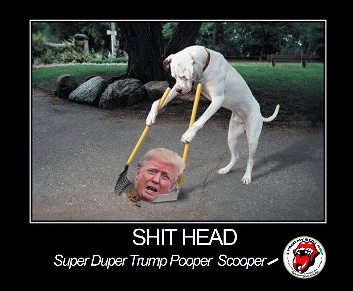 Funny Training Meme : Image result for donald trump memes animals defecating on him
