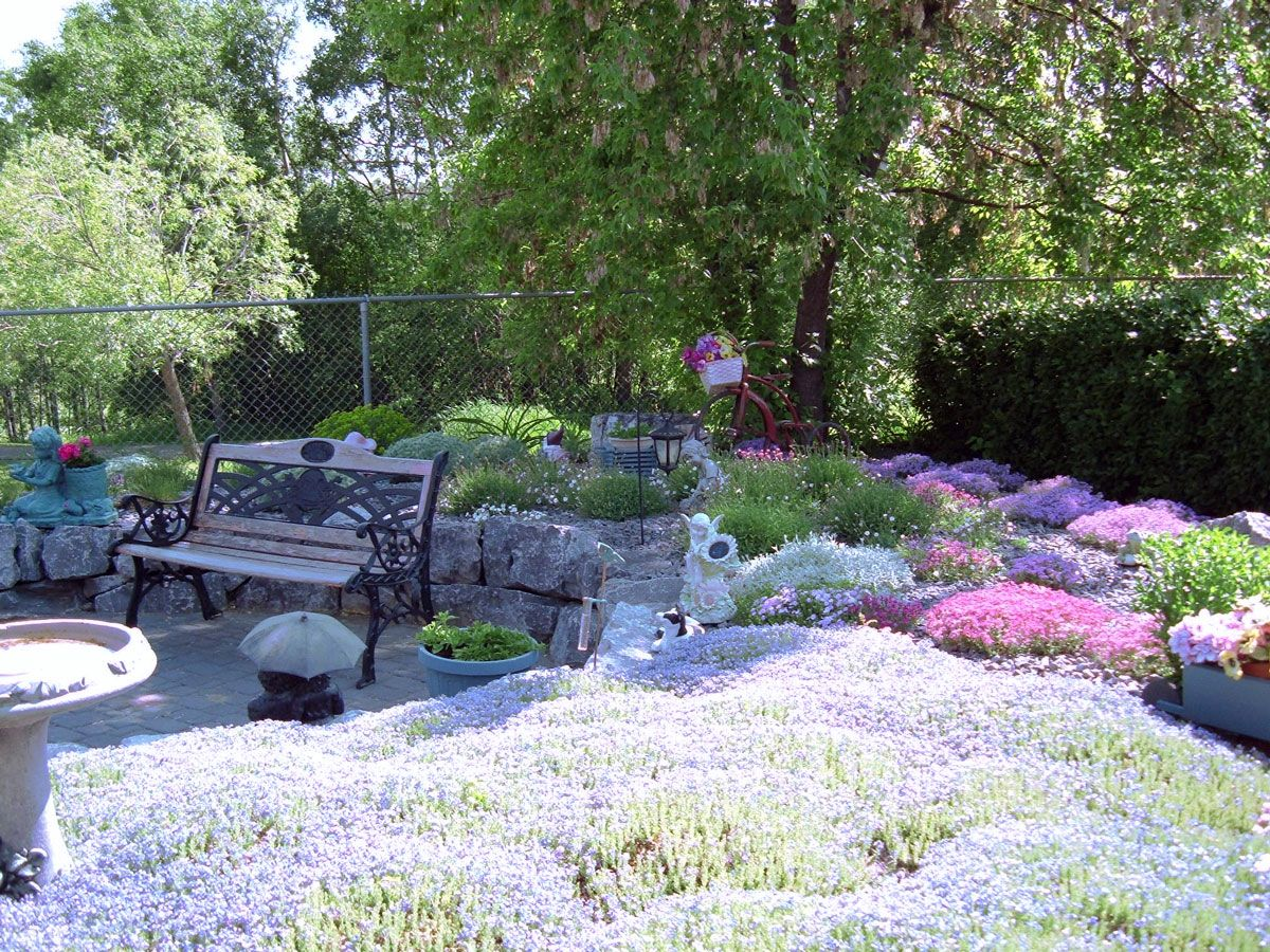 mass planting of alpine perennials in this rock garden. in bloom
