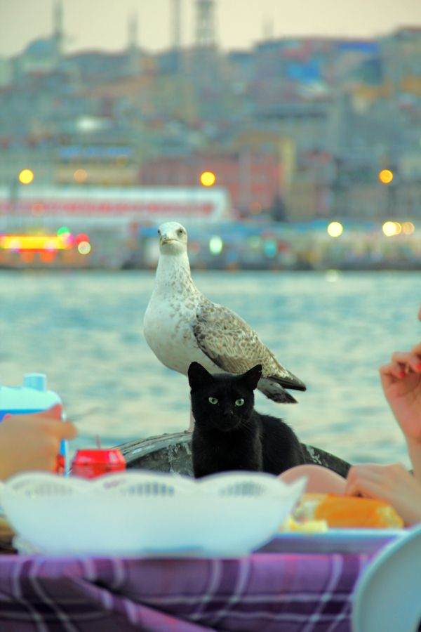 hungry by Mustafa Nedim Aytan, via 500px - Istanbul
