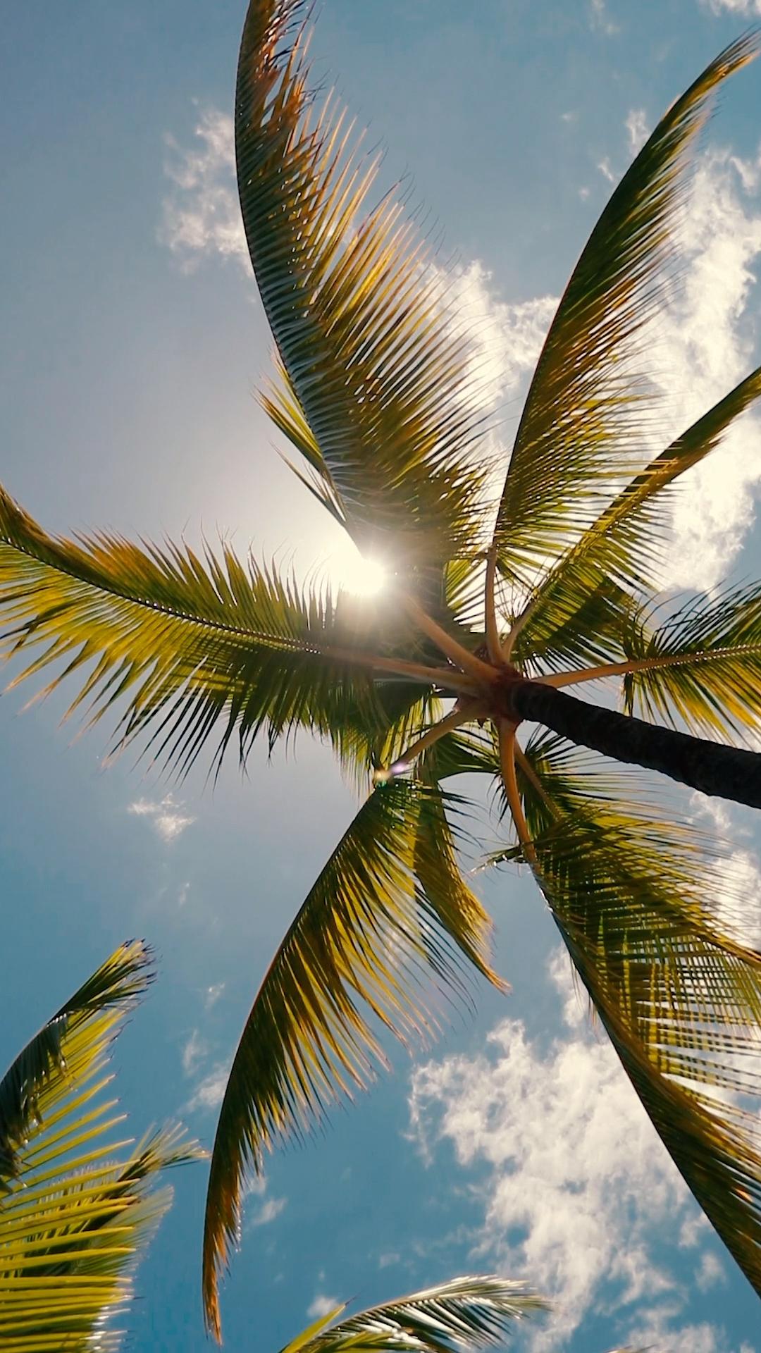 Photo of Sommervibber av palmetre
