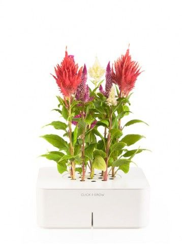 Electronic flower and herb pots from Click & Grow, using state-of-the-art sensors, software, and a fertilizer system to grow beautiful, healthy plants perfect for the forgetful gardener, busy city-dweller, or constant traveler.
