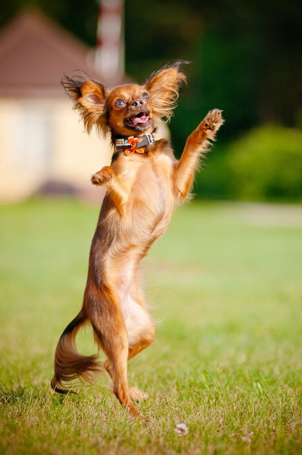 The U K Kennel Club Bans Extreme Dog Dancing Dogster Friday Dog Dogs Dog Shock Collar