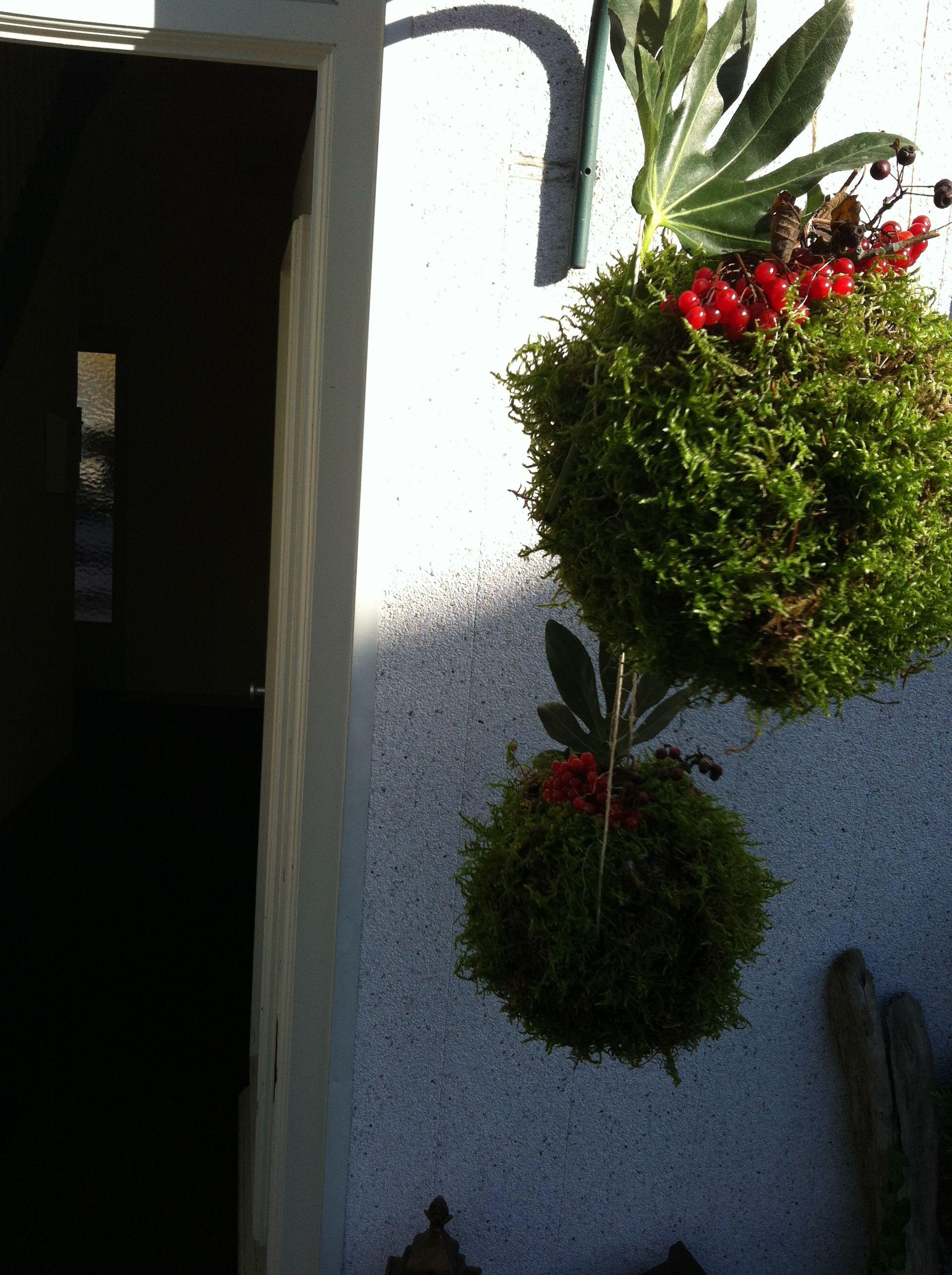 Good Kuhle Startseite Dekoration Deavita Gartendeko #11: Gartendeko Mooskugeln Zum Aufhängen