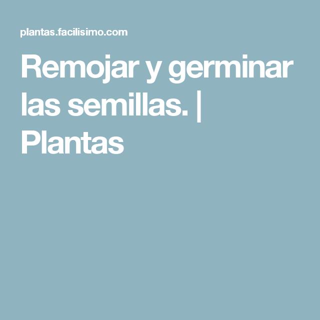 Remojar y germinar las semillas. | Plantas