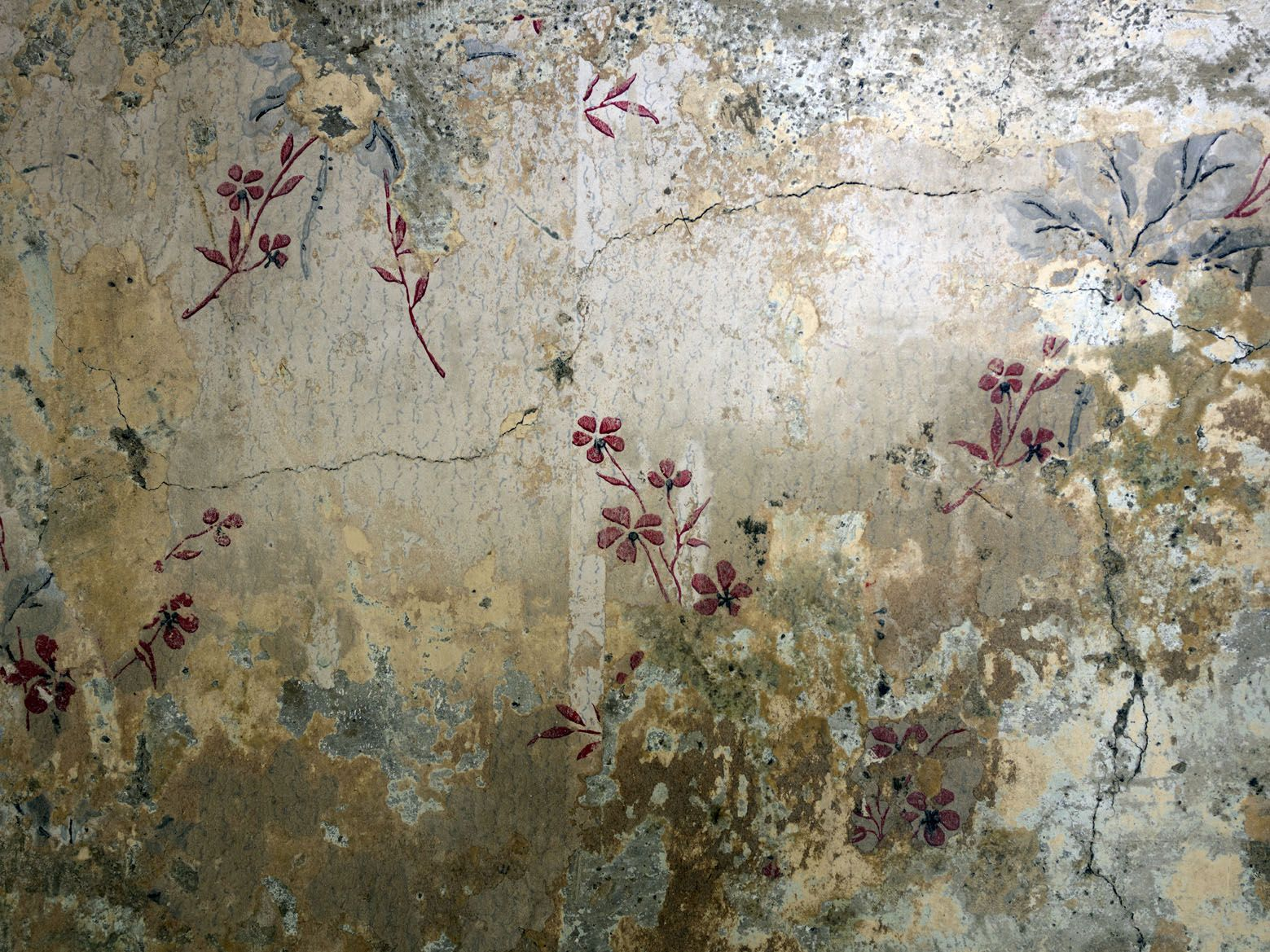 delicate flowers debi treloar wallpaper anthro inspo pinterest beate wandfarben und. Black Bedroom Furniture Sets. Home Design Ideas