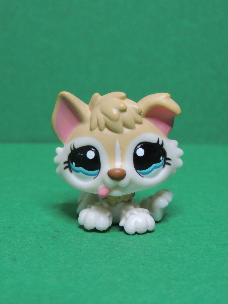 1013 chien dog chiot husky brown puppy blue eyes lps - Chien pet shop ...