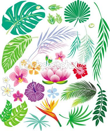 Tropical Leaf And Flowers Tropical Leaves Tropical Flower Sketches Green leaf on white sand during daytime. tropical leaf and flowers tropical