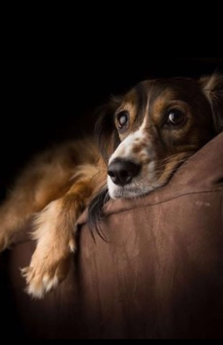 Pin von Audrey carlson auf Dogs Hunde, Hund und katze