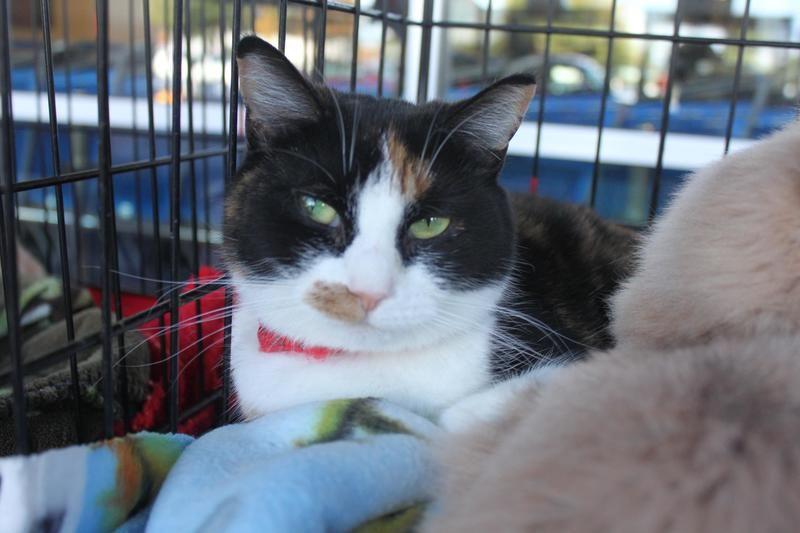 Adopt Edie on Animals, Adoption, Animal rescue