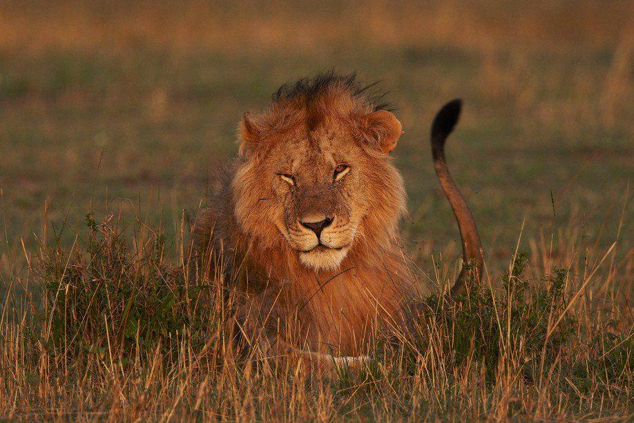 18. Fotosafari in Afrika