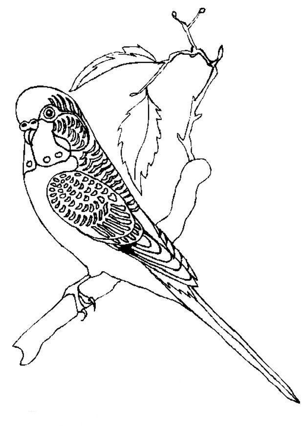 Kleurplaten Grote Vogels.Parkiet Kleurplaten Parkieten En Vogels